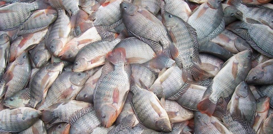 Semana Santa com peixe para todos na cidade da Água Preta!